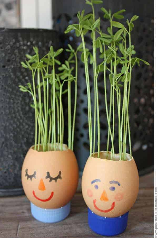 Diy: Eggshell Planter 1 - Flowers & Plants