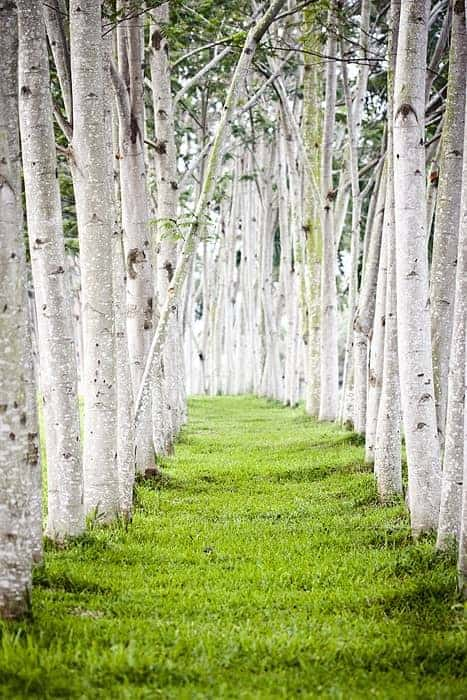 Trees Pathway Landscape - landscaping