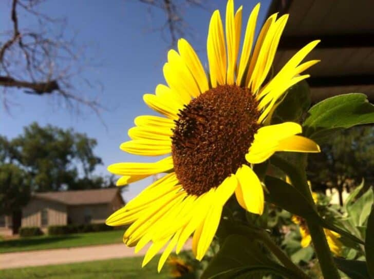 Pictures from a Texas Gardener Flowers, Plants & Planters