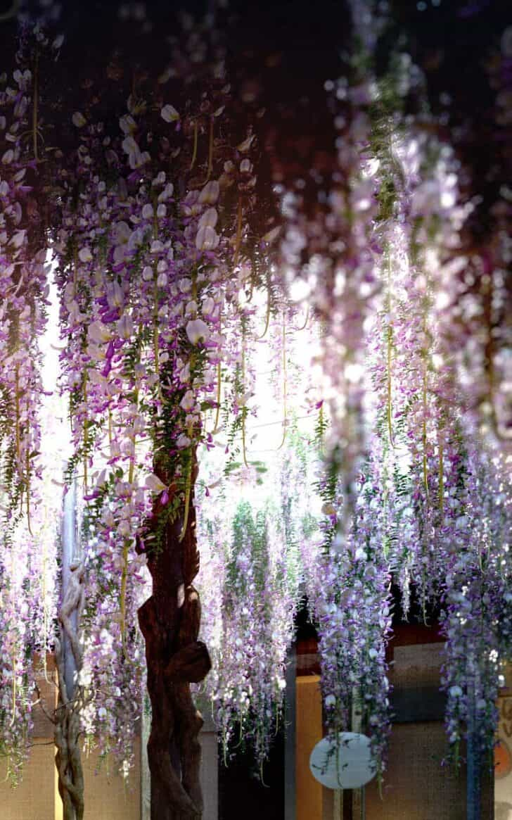 Wisteria Flowered Patio 1 - Outdoor Lighting - 1001 Gardens