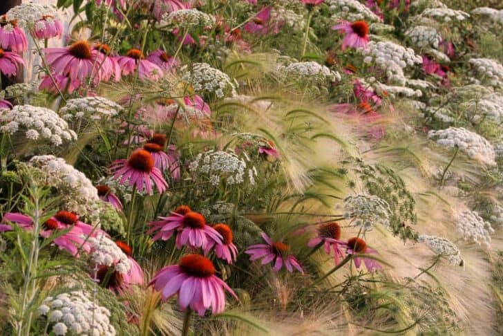 Flowered Garden Prairie - landscaping