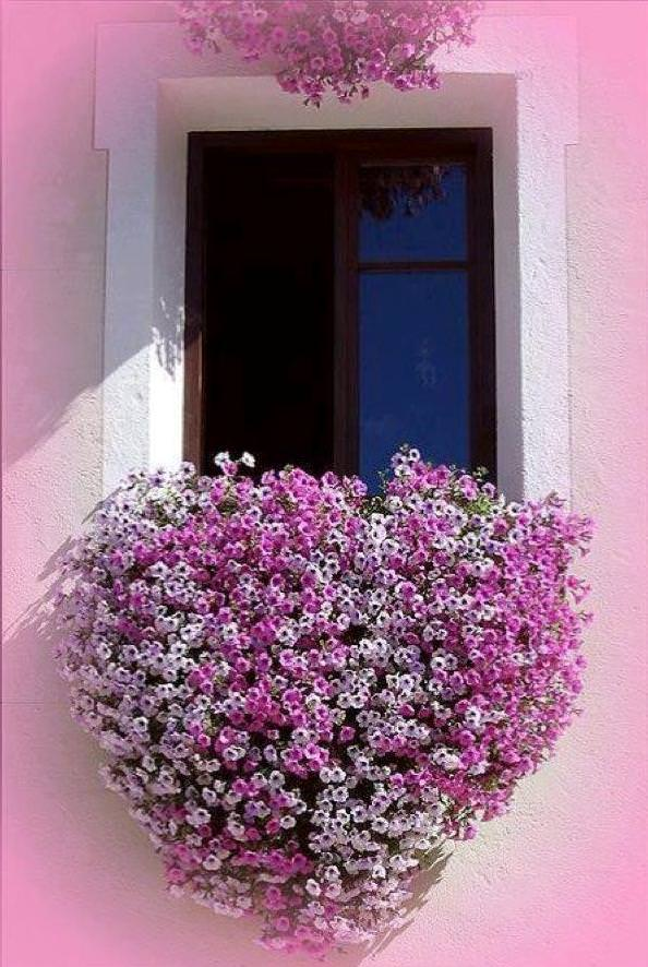 Flowered Window 1 - Flowers & Plants - 1001 Gardens