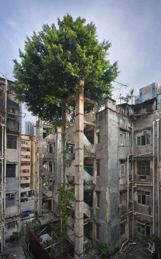 Wild Concrete: The Tenacity of Life