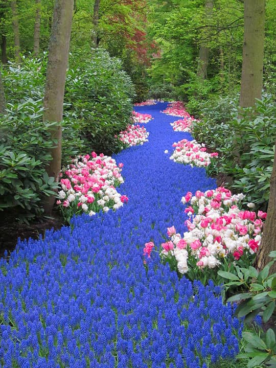River of Flowers Landscape - landscaping, flowers-plants-planters