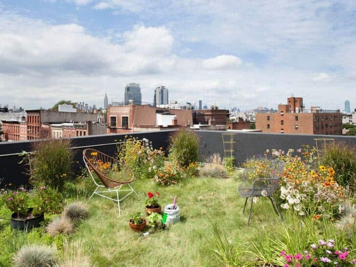 Flowered Rooftop Garden Landscape in Brooklyn (N.y) - landscaping