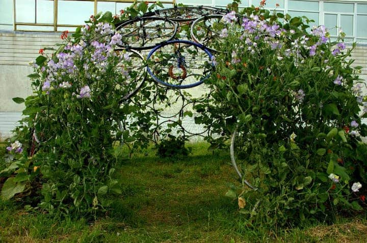 Bicycle Rim Vertical Gardening Dome 1001 Gardens