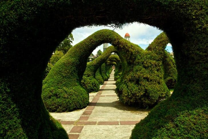 20 Amazing Beautiful Tree Tunnels Landscapes - landscaping