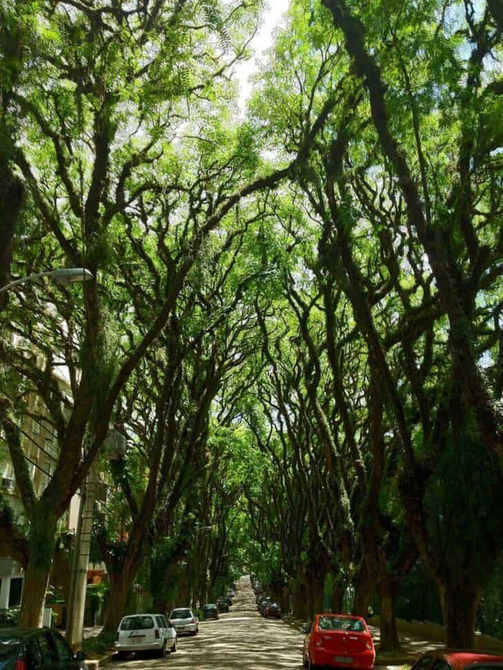 amazing-tree-tunnels-4-1