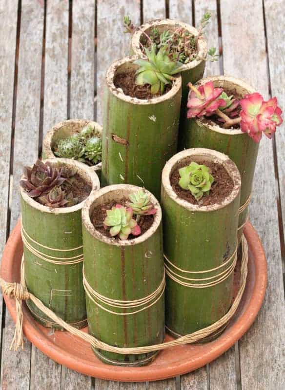 Diy bamboo planters 1001 gardens for Bambou interieur deco