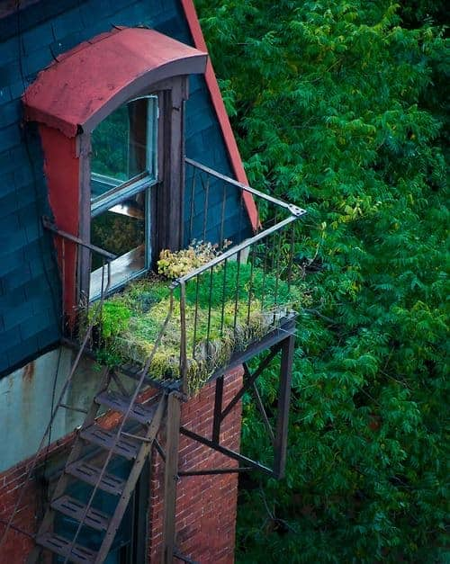 Urban Garden on Fire Escape - guerrilla-gardening