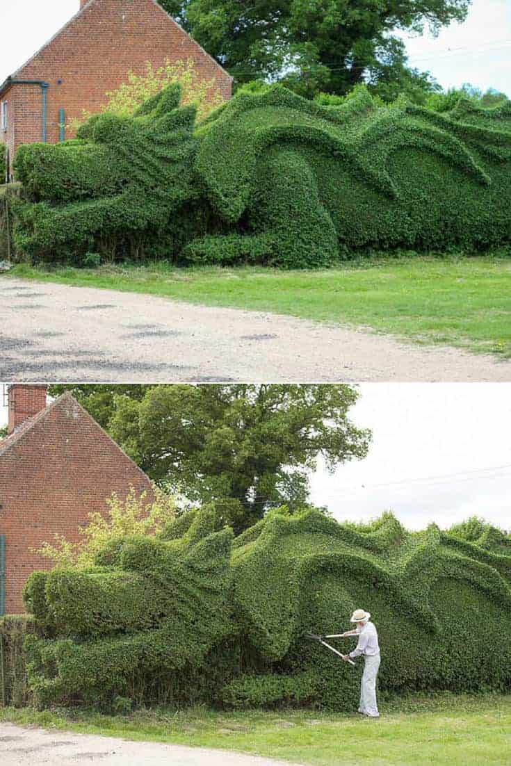 Giant Dragon Sculpted Into A 100 Feet Hedge 1001 Gardens