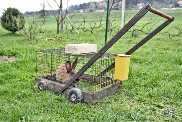 Natural Lawn Mower - guerrilla-gardening