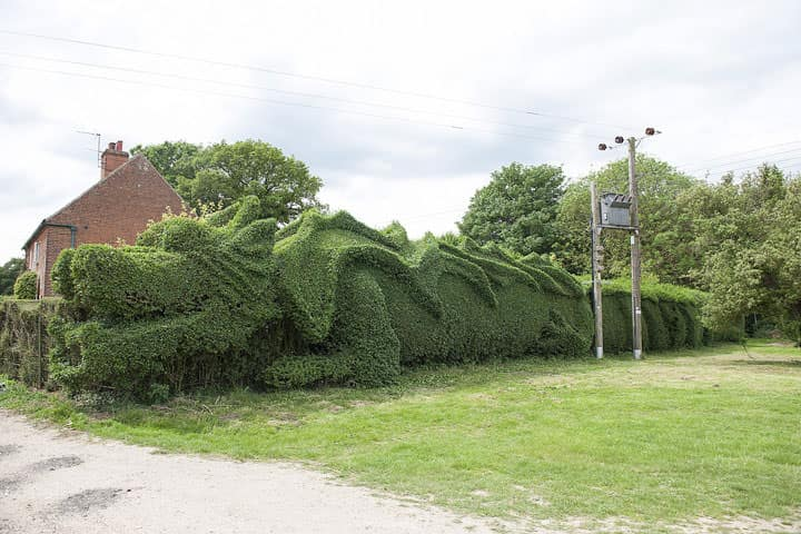 Giant Dragon Sculpted into a 100-feet Hedge Garden Decor