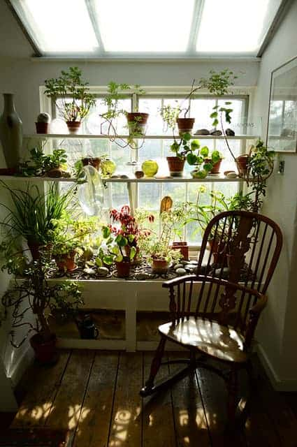 Indoor Garden - flowers-plants-planters