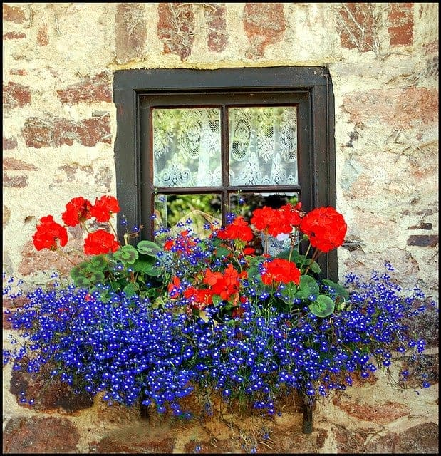 Beautiful Flowered Window - flowers-plants-planters