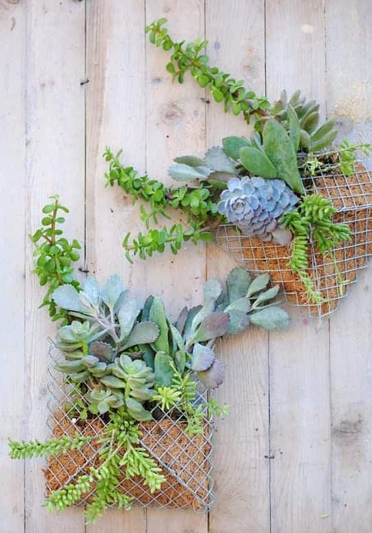 Diy: Small Succulent Wall Planter - flowers-plants-planters