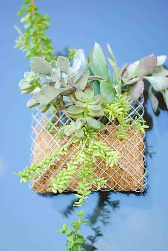Diy: Small Succulent Wall Planter 2 - Flowers & Plants