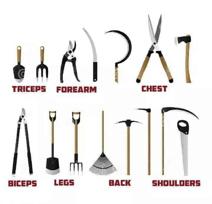 Gardening workout 1001 gardens for Garden hand tools names