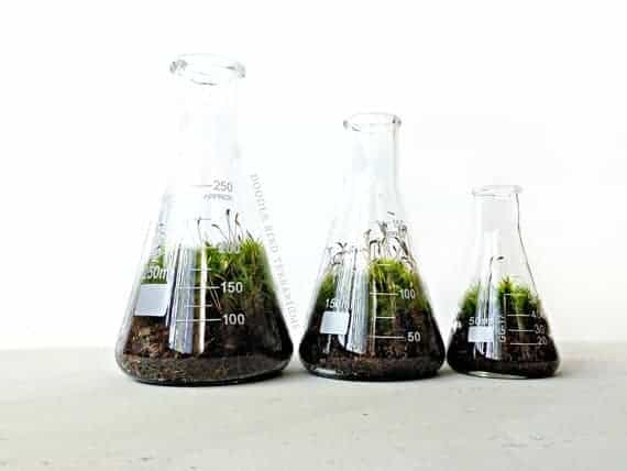 Lab Terrarium - flowers-plants-planters