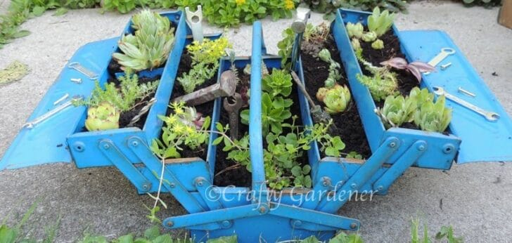 Succulent Toolbox Planter Flowers, Plants & Planters