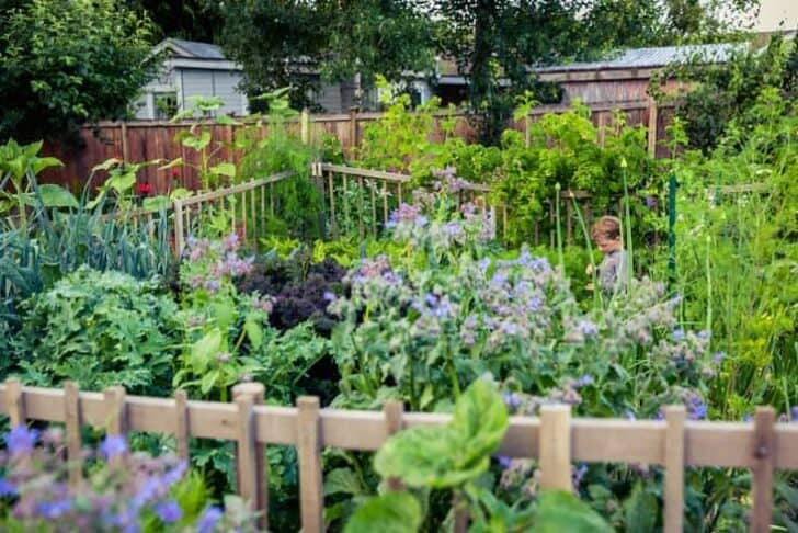 Permaculture Inspired Children's Edible Garden Flowers, Plants & Planters