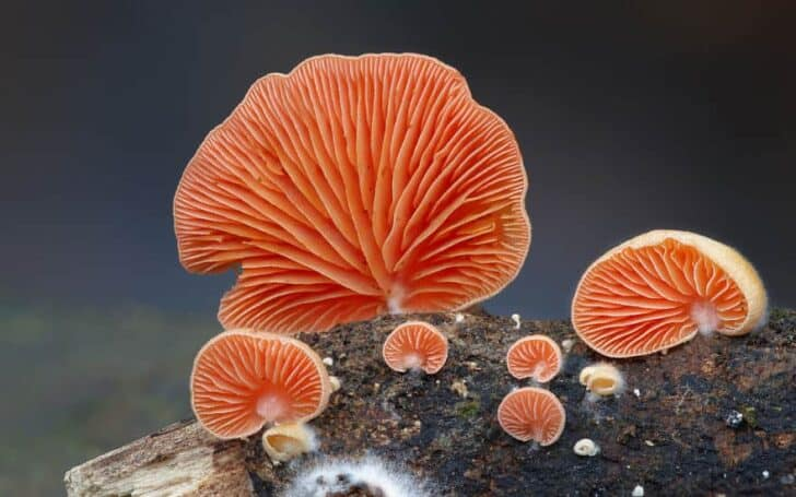interesting-mushroom-photography-88__880