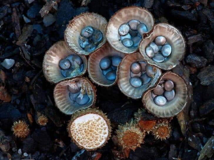 The Amazing World of Mushrooms - flowers-plants-planters