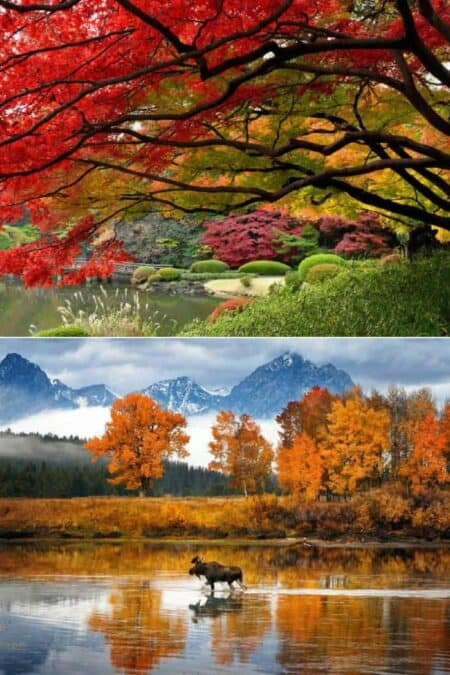 Beautiful Colors of Autumn Landscapes