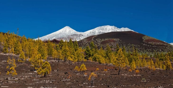 Blooming-flower-tenerife-teide-05