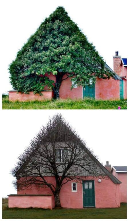 House Shaped Beautiful Tree to Shelter Itself from Wind 15 - Landscape & Backyard Ideas