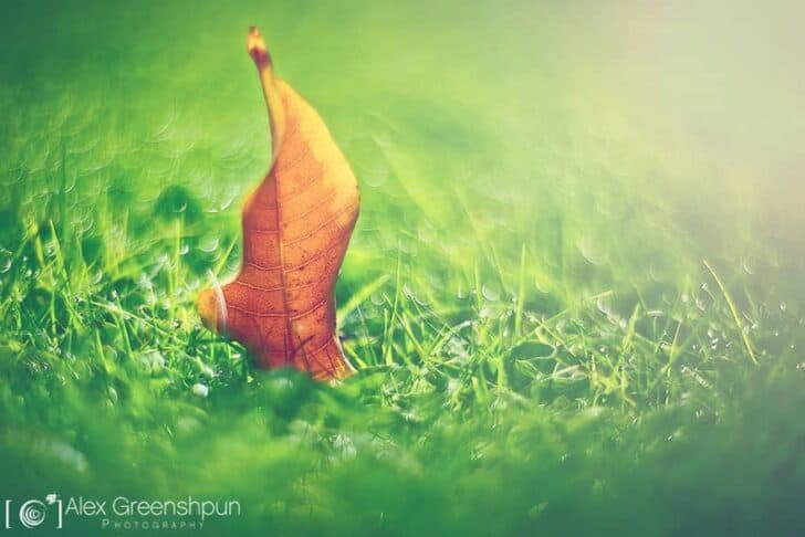 autumn-photography-alex-greenshpun-13