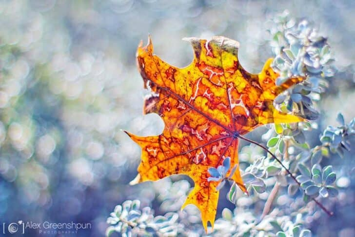 autumn-photography-alex-greenshpun-14