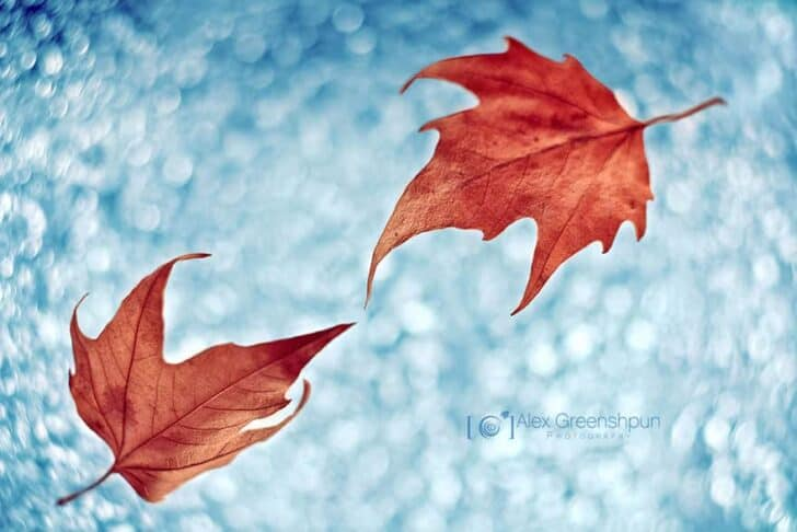autumn-photography-alex-greenshpun-17