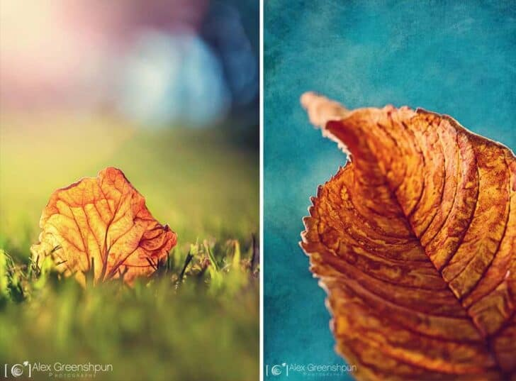 autumn-photography-alex-greenshpun-25