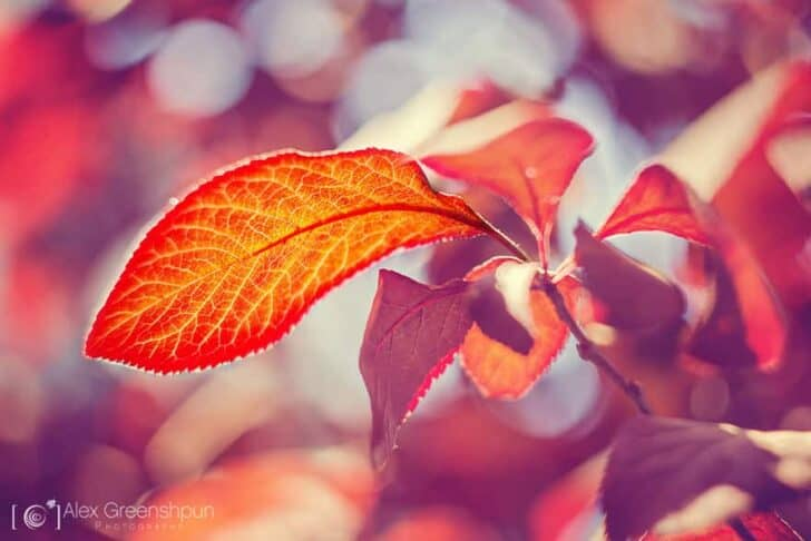 autumn-photography-alex-greenshpun-5