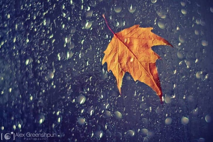 autumn-photography-alex-greenshpun-8