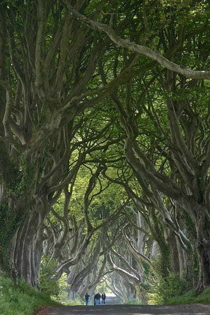 Dark Hedges Landscape, Ballymoney - landscaping