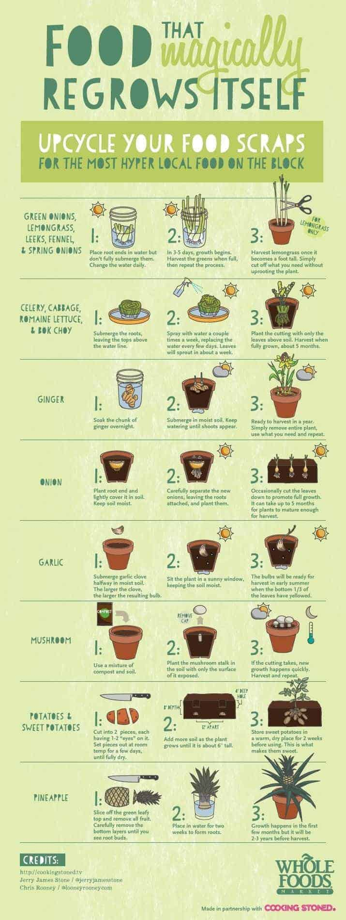 Upcycle Your Food Scraps - flowers-plants-planters