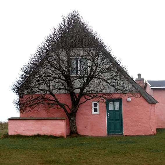 House Shaped Beautiful Tree to Shelter Itself from Wind Landscapes