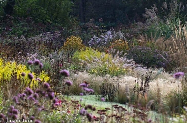 Colors of Fall in a Dutch Flowered Garden Landscape - landscaping