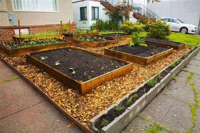 He Started with Raised Beds, and 60 Days Laters, His Neighbors Love Him - flowers-plants-planters