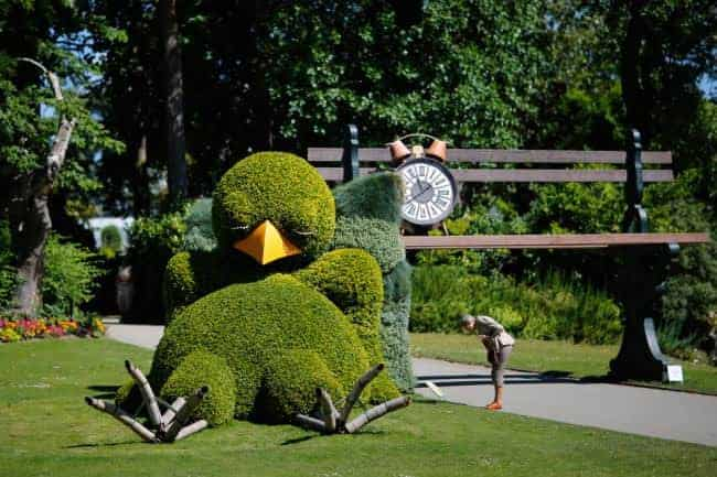Sleepy Chick Hedge Landscape - landscaping