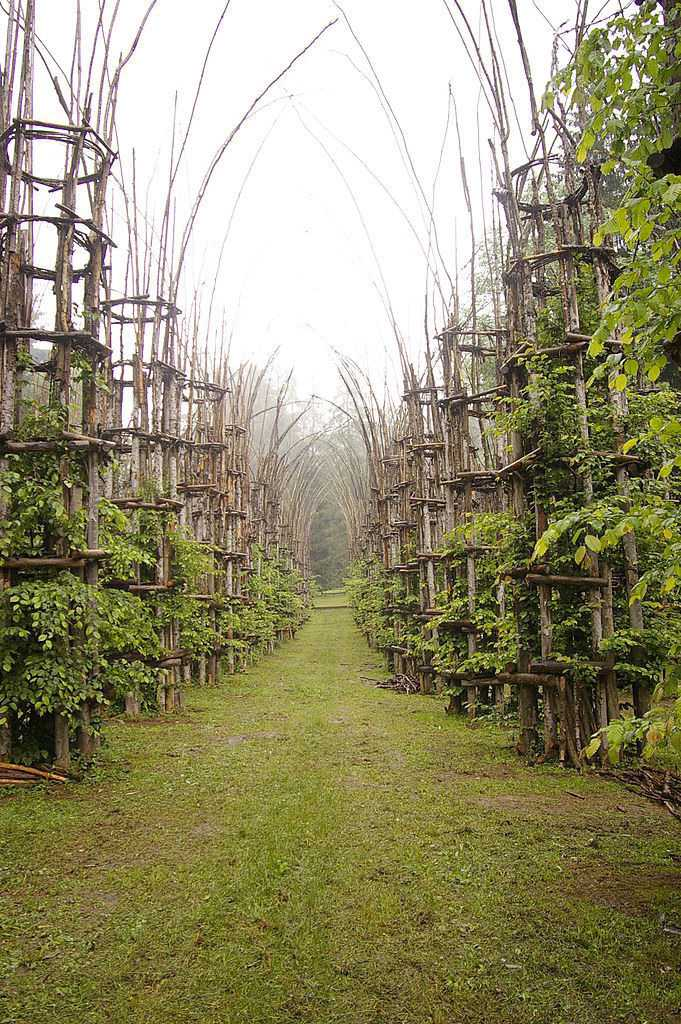 Beautiful Tree Cathedral Landscape by Giuliano Mauri 6 - Landscape & Backyard Ideas