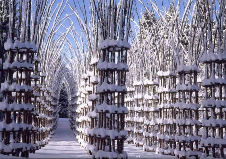 Beautiful Tree Cathedral Landscape by Giuliano Mauri - landscaping