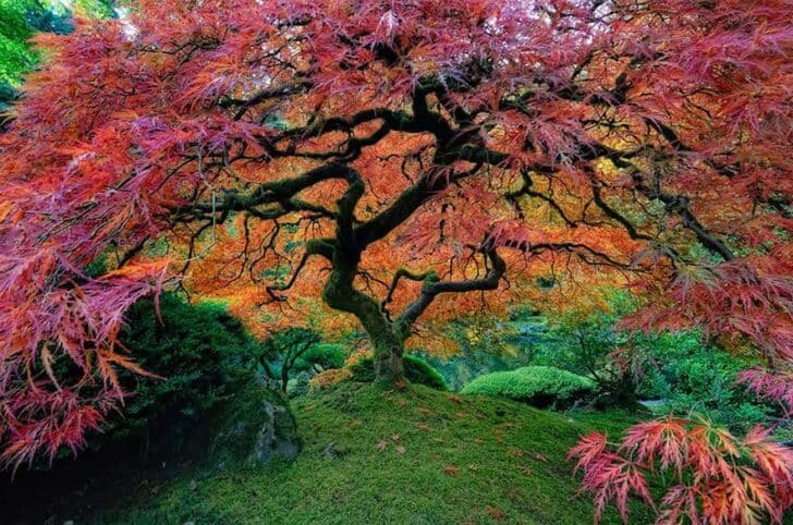 The Most Beautiful Trees in the World Landscapes