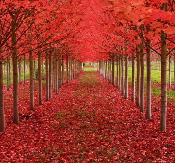 The Most Beautiful Trees in the World - landscaping