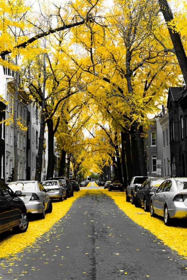 World's Most Magical Streets Shaded - garden-decor