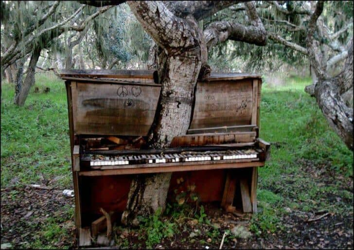 Piano vs Beautiful Tree in Monterey Guerrilla & Urban Gardening