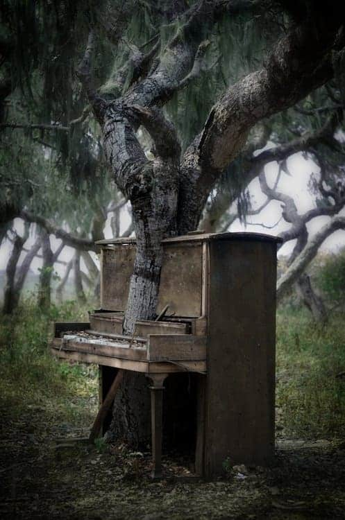 Piano vs Beautiful Tree in Monterey - guerrilla-gardening