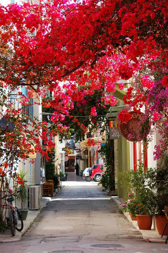 10 Beautiful Streets Shaded by Trees 2 - Flowers & Plants - 1001 Gardens